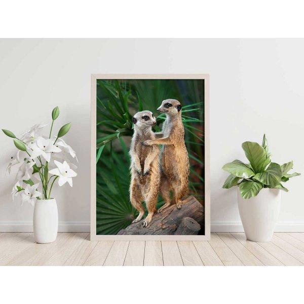 Super cute meerkats - Animals poster