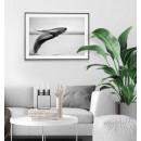 Humpback Whale - Original animal poster