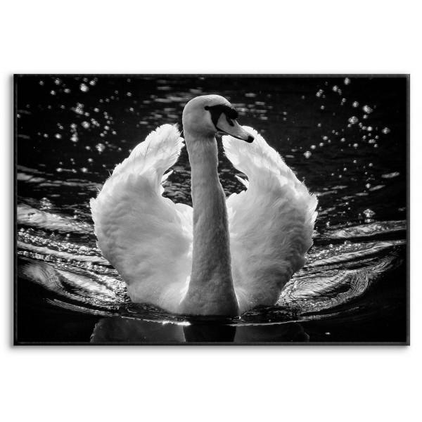 Beautiful Swan - Poster