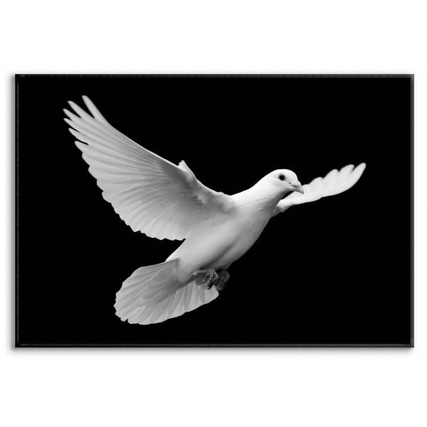 Beautiful Dove - Poster