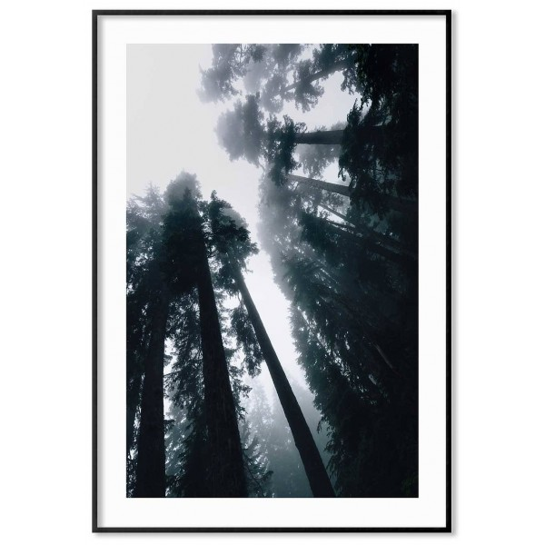 Redwood forest - Simple nature poster