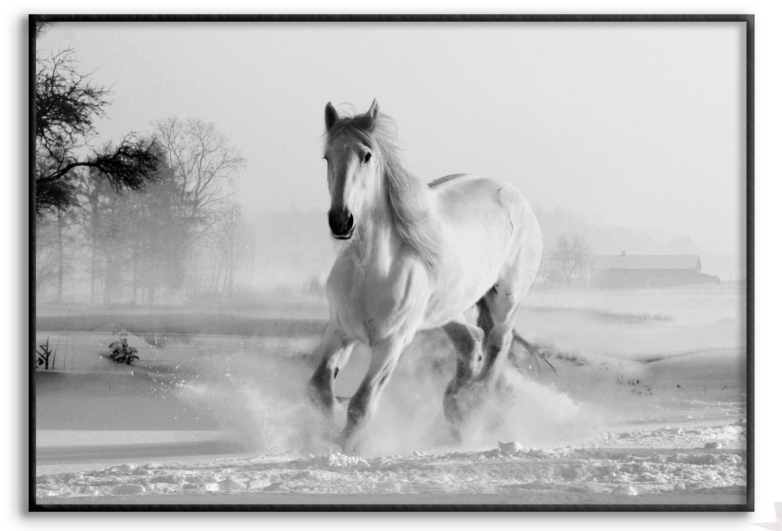 Horses Running In Snow Poster