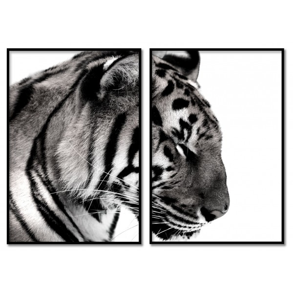 Tiger - Poster in Two Pieces
