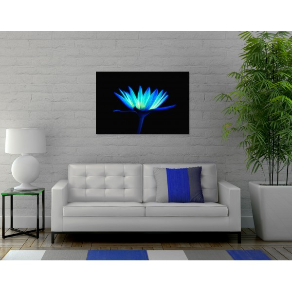 Turquoise Daisy in the Dark - Big Poster
